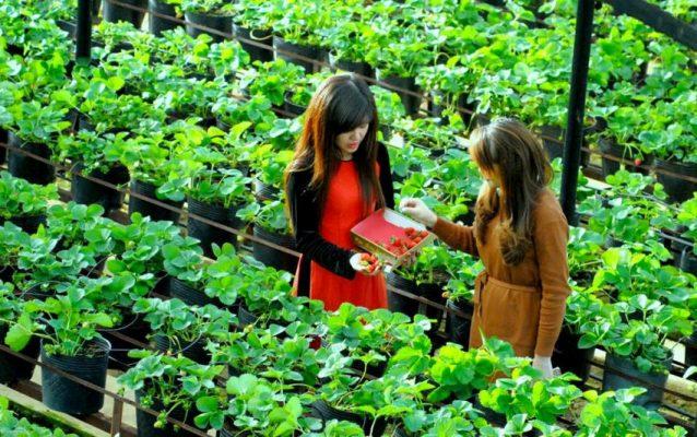 12 cach kinh doanh o nong thon hien nay bytuong com e1540048953457 638x400 - Hướng dẫn cách khởi nghiệp ở nông thôn đơn giản mà thành công